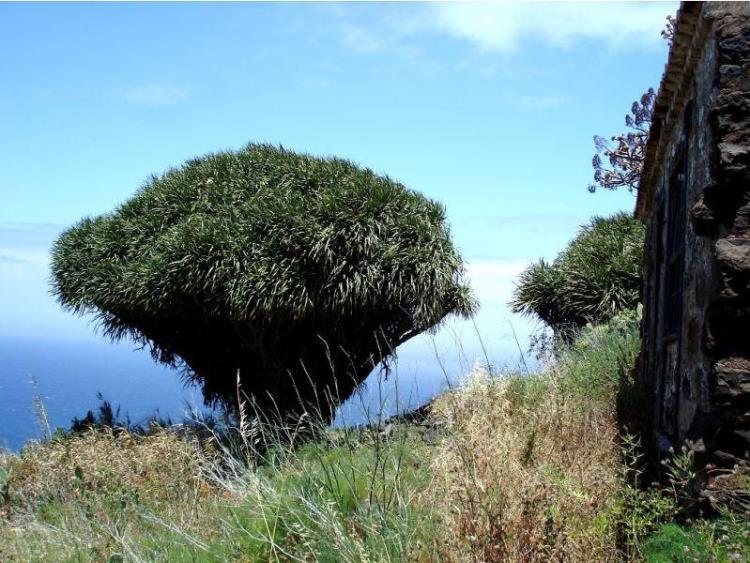 800003, Camino el Pinar 65, Tijarafe