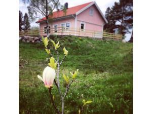 Haus Nr. S60012